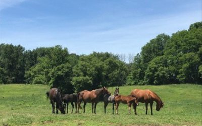 Calling All Pennsylvania Horse Owners and Caretakers!